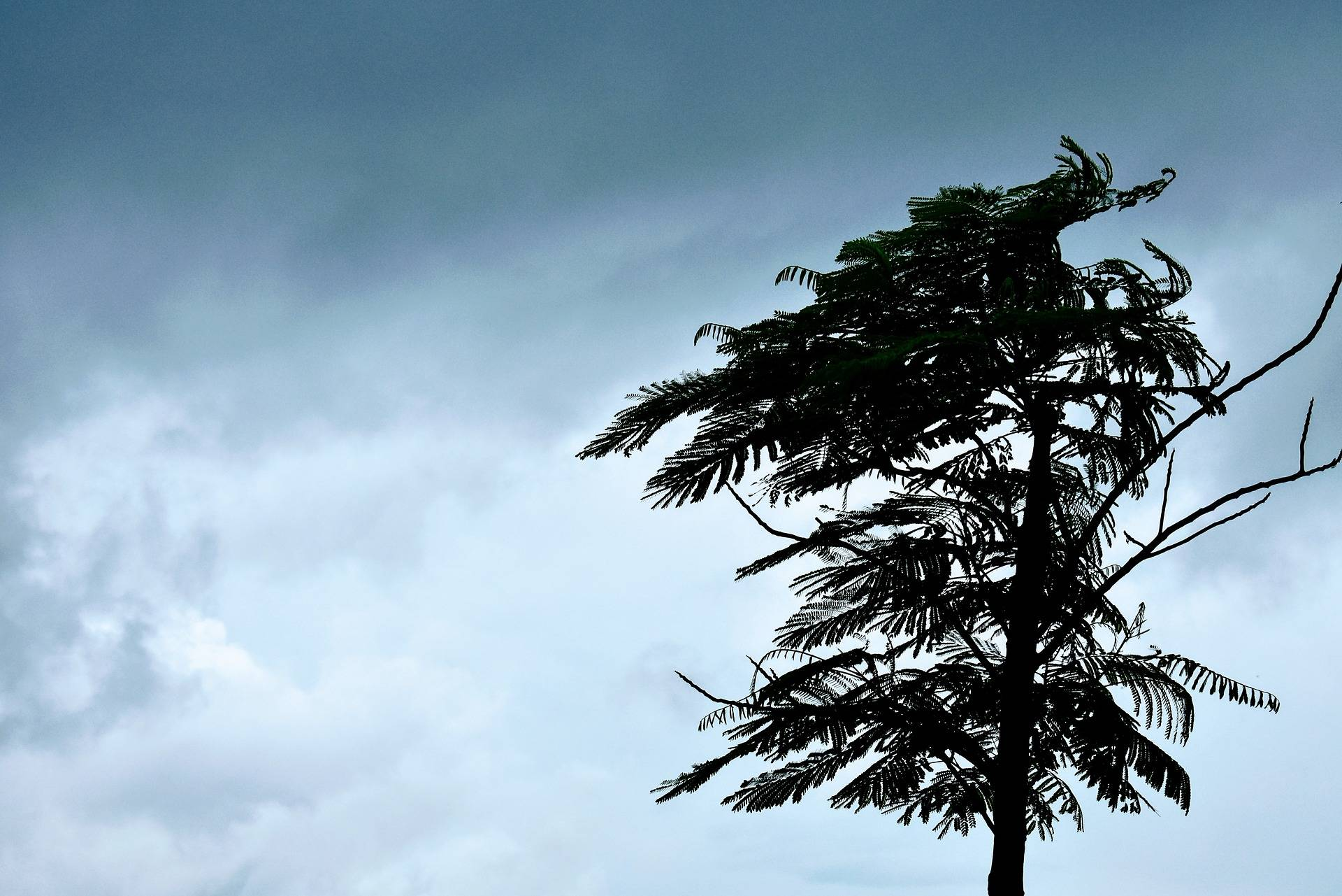Heavy winds expected throughout Haida Gwaii (File photo)